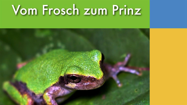 Präsentation: Vom Frosch zum Prinz
