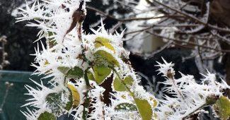 Eiszapfen im Garten