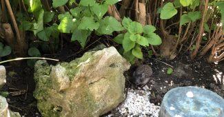 Igel im Garten